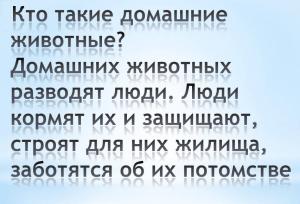 Kto-takie-domashnie-zhivotnye-300x204.png