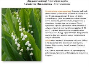 landysh-majskij-kratkoe-opisanie_24.jpg