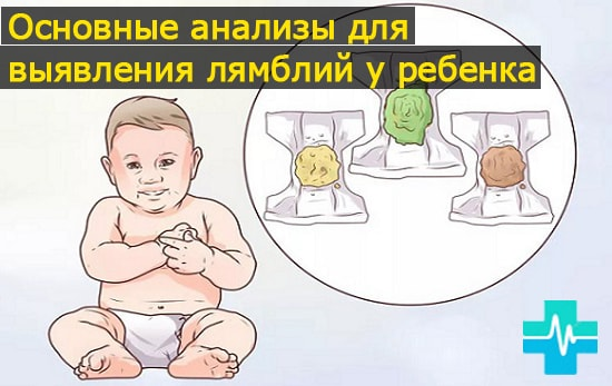 lechis-q59-min.jpg.pagespeed.ce.MtceMbsSn2.jpg