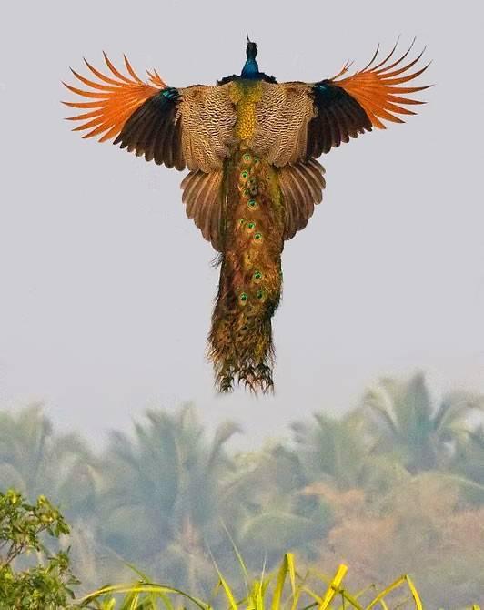-летает-фото.jpg