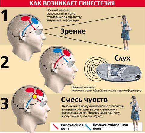 mehanizm-sinestezii.jpg