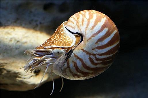 mollusk.jpg