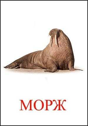 MORZH.jpg