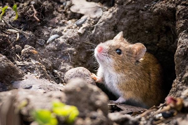 -мыши.jpg
