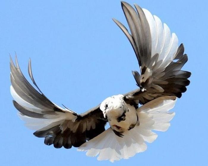 nikolaevskiy-golub.jpg