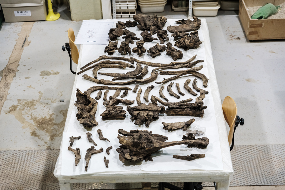 Paleontologist%202.jpg