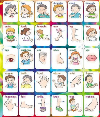 parts_of_the_body_cards_2-424x500.jpg