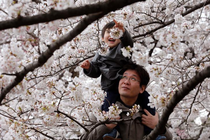 pb-130324-blossoms-cannon.jpg