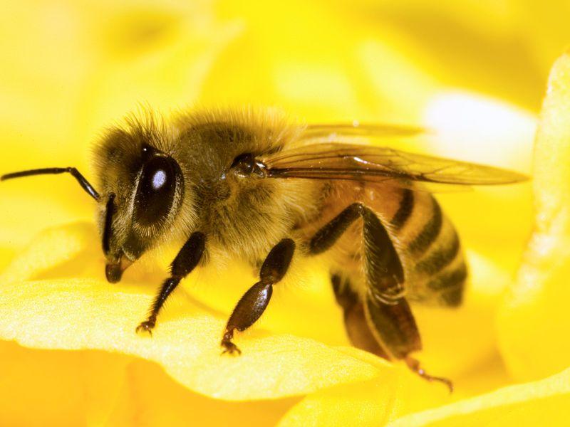 -пчел-фото.jpg