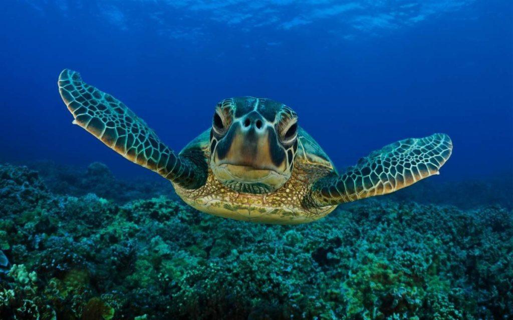picture-of-a-sea-turtle-163-e1413272412718.jpg