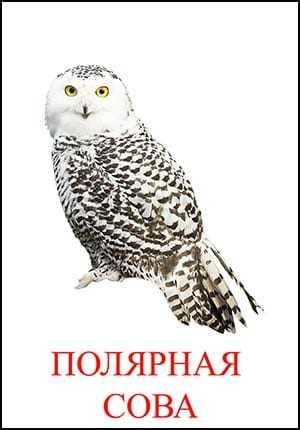 POLAR-SOVA.jpg