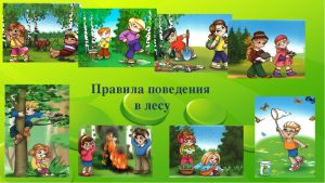 pravila-povedeniya-v-lesu-dlya-detey-300x169.jpg