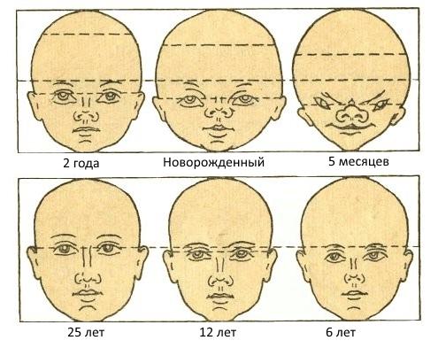 proporcii_detskogo_lica.jpg