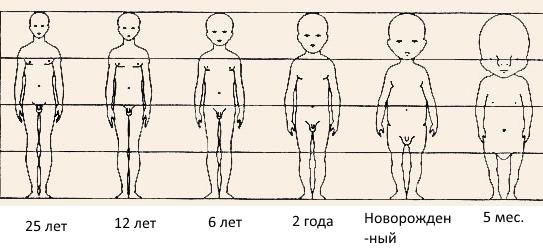 proporcii_detskogo_tela.jpg