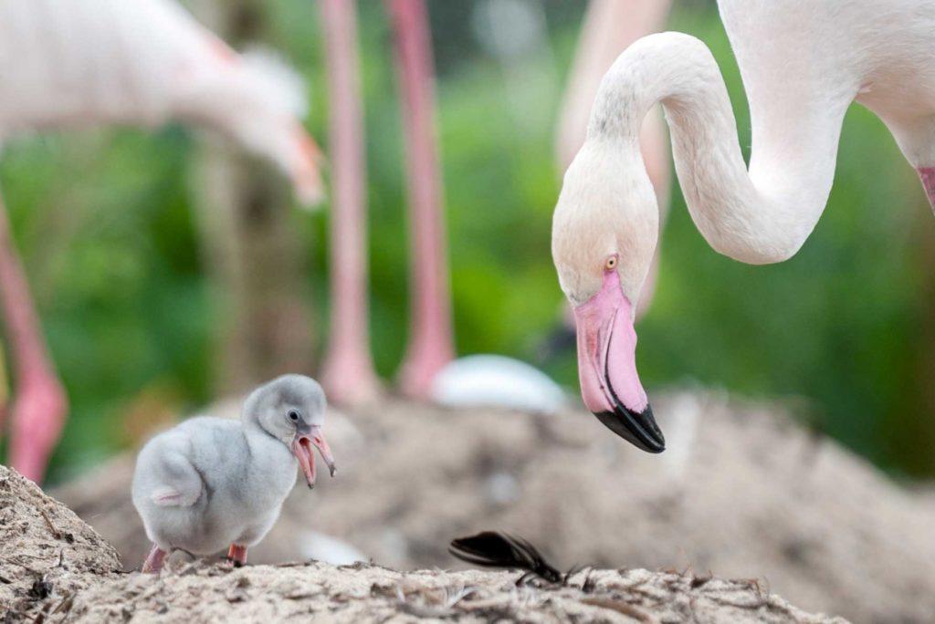 ptenec_flamingo.jpg