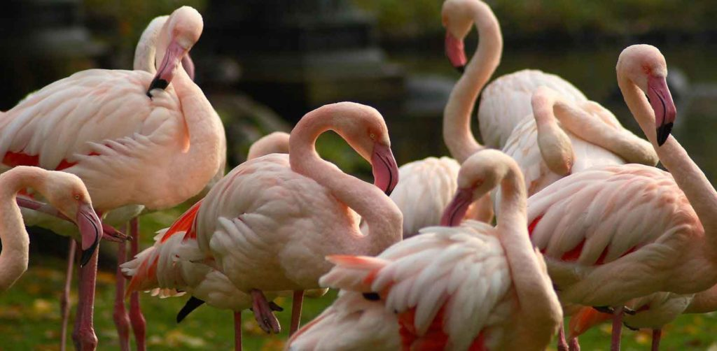 ptica_flamingo.jpg