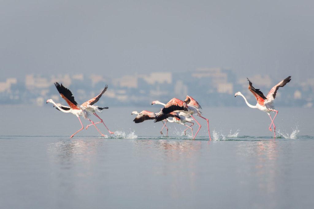 rozoviy_flamingo_foto.jpg