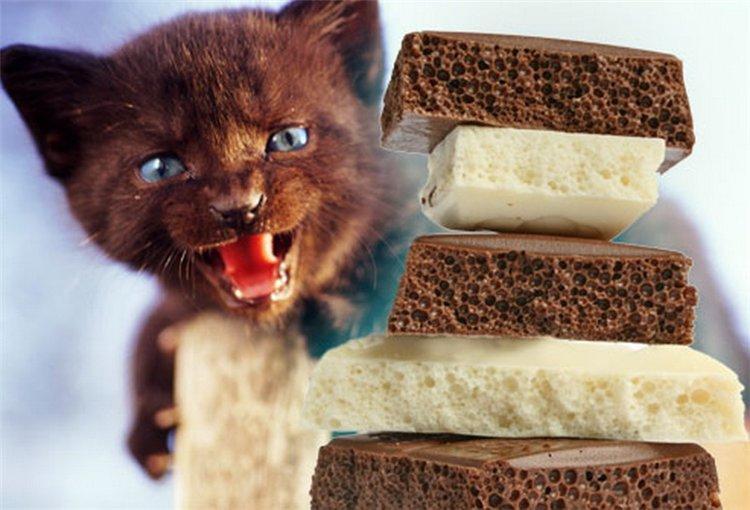Shokolad-vkusnyatina-ili-sredstvo-ot-vseh-bolezney.jpg