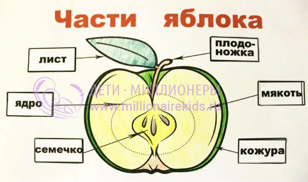skachat-kartinku-yabloko-dlya-detey-1.jpg