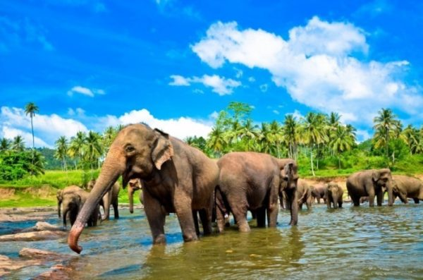 slony-600x397.jpg