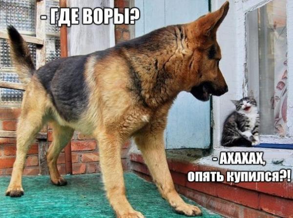 smeshnie_kartinki_146006061371.jpg