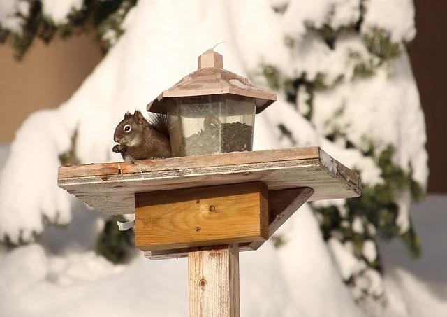 squirrel-581566_640.jpg