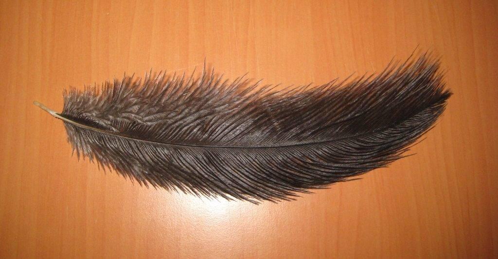 -страуса-фото-1024x533.jpg