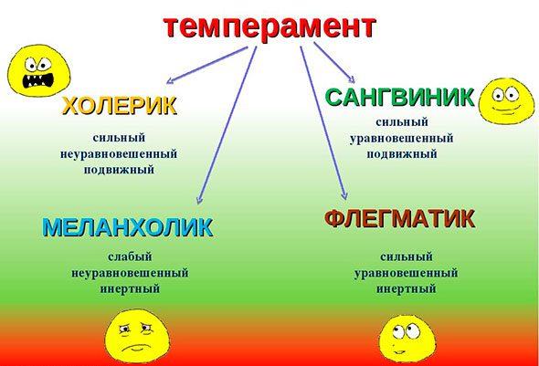 temperament8-e1588309695684.jpg