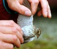 thumbs_ornithologist-1.jpg