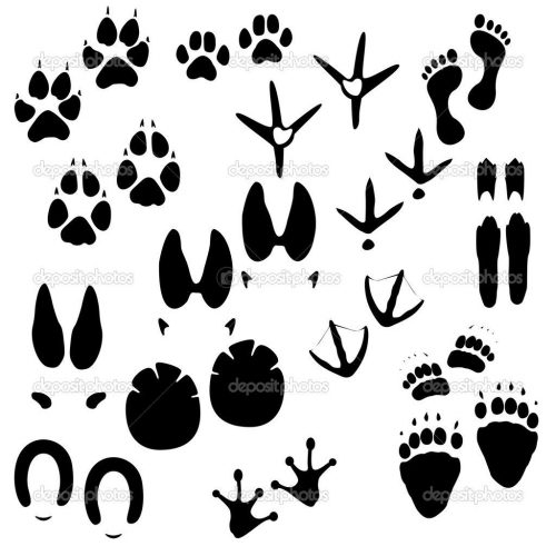 traces_of_animals_3-500x500.jpg