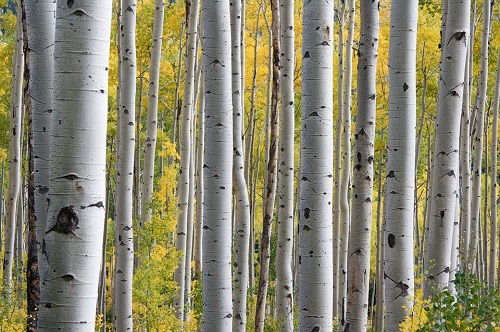 trees-690727_960_720.jpg