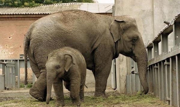-в-слоновнике.jpg