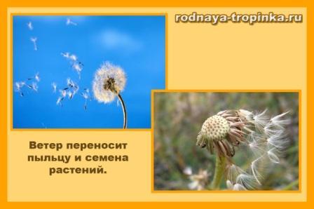 veter-i-rasteniya_1.jpg