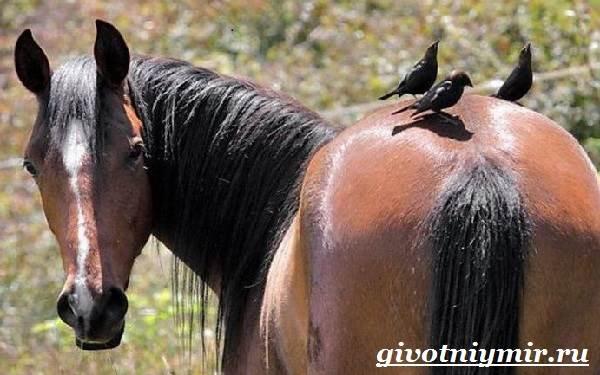 vorobej-ptica-obraz-zhizni-i-sreda-obitaniya-vorobya-6.jpg