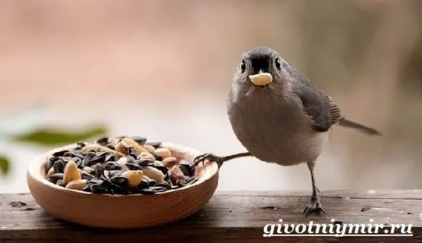 vorobej-ptica-obraz-zhizni-i-sreda-obitaniya-vorobya-7.jpg