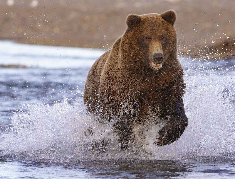 -заповедник-бурый-медведь-фото.jpg