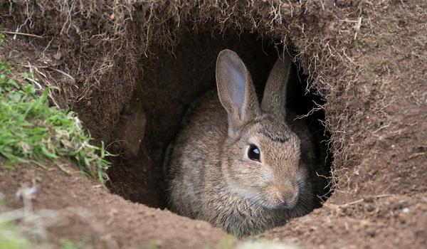 -зайца.jpg