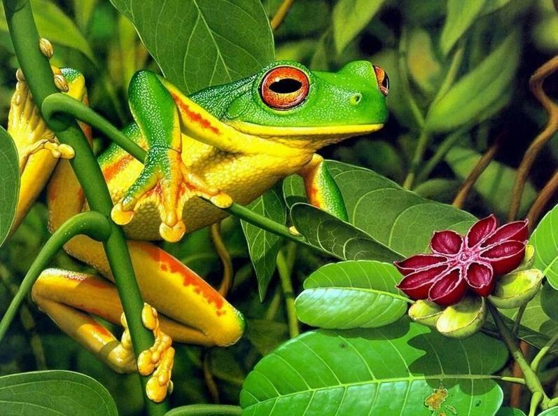 -зеленая-лягушка-фото.jpg