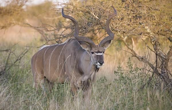 zhivotnye-savanny-opisaniya-nazvaniya-i-osobennosti-zhivotnyx-savanny-2.jpg
