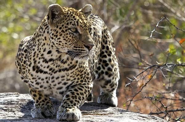 zhivotnye-savanny-opisaniya-nazvaniya-i-osobennosti-zhivotnyx-savanny-22.jpg