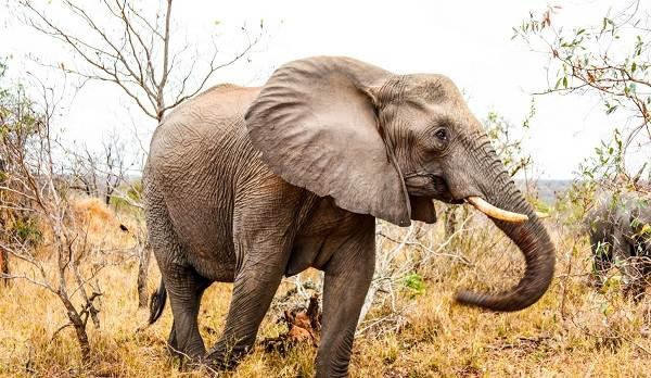 zhivotnye-savanny-opisaniya-nazvaniya-i-osobennosti-zhivotnyx-savanny-6.jpg
