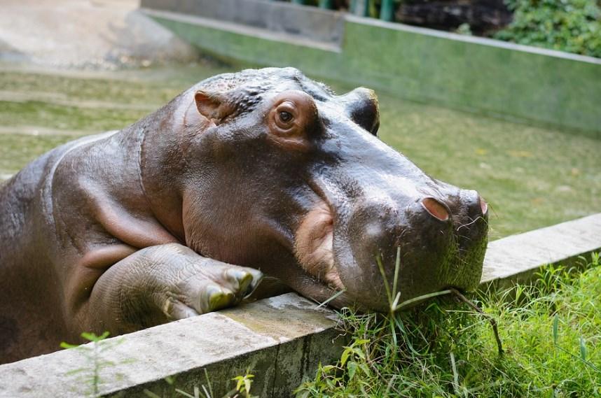 Zoopark.jpg